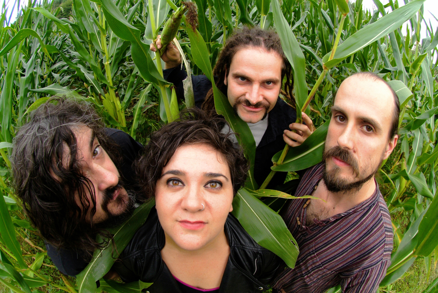 zea mays cover