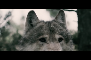 "Behemoth: ""Wolves ov Siberia"""